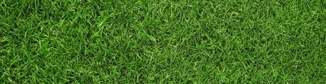 Ambience Grass